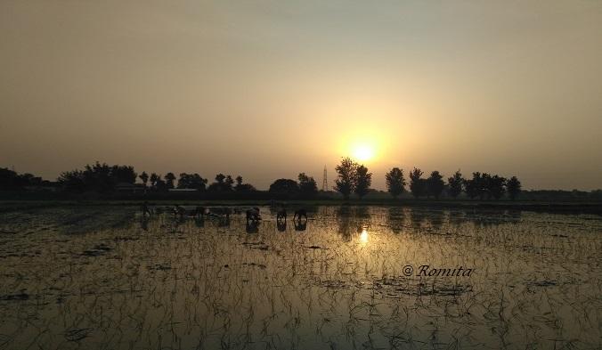 Farmers_Romita Saluja